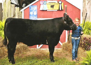 2012-grand-champion-market-steer-athens-county-fair-audrey-ross