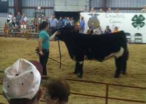 2012-grand-champion-market-steer-crawford-county-fair-jessica-millenbaugh