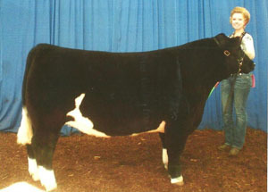 2012-grand-champion-market-steer-ford-and-will-county-fair-taylor-braasch