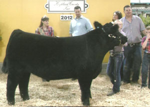 2012-grand-champion-market-steer-highland-county-fair-larkyn-parry