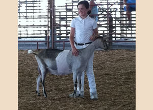2012-grand-champion-senior-dairy-doe-sofia-klinedinst