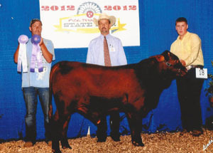 2012-reserve-champion-bull-tennessee-state-fair-roger-mattingly