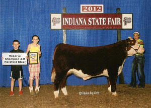 2012-reserve-champion-hereford-steer-indiana-state-fair-jill-vandewalle