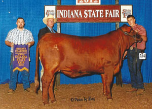 2012-reserve-champion-santa-gertrudis-indiana-state-fair-cody-mattingly