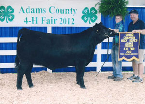 2012-supreme-champion-heifer-adams-county-fair-brad-greend