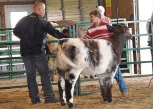 2012-supreme-champion-heifer-st-joseph-county-fair-wyatt-cool
