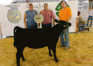 2012-supreme-champion-hereford-heifer-calf-north-central-angus-show-land-sautter