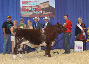 reserve-grand-champion-market-steer-shorthorn-jr-nationals-justin-shonkwiler