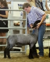 14-Champion Natural Color Market Lamb-Clinton County Fair-Mitchell Ferrel