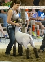 14-Champion Shropshire Lamb-Clinton County Fair-Ashley Ferrel