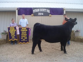14-Grand-Champion-Heifer-Putnam-County-4H-Fair-Drew-Boyette