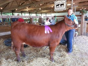 14-Grand-Champion-Heifer-Wayne-County-Fair-Vanessa-Schumm