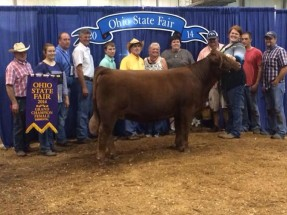 14-Late-Jr-Yearling-Ohio-State-Fair-Kyndall-Williams