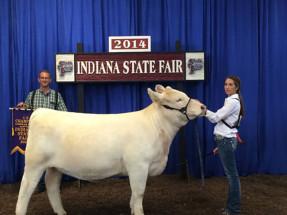 14-4H-Champion-Charolai-Heifer-&-Reserve-Champion-Charolais-Heifer–Indiana-State-Fair-Jessica-Jansen