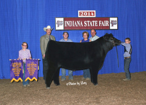 14-4H-Reserve-Grand-Champion-&-4H-Champion-Maine-Anjou-Steer-Indiana-State-Fair-Nathan-Hayden