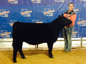 14-Breed-Champion-Simmental-Solution-Fourt-States-Fair-Allison-Carson