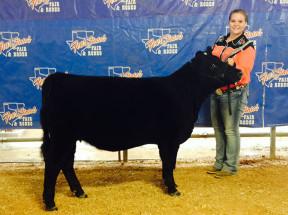 14-Breed-Champion-Simmental-Solution-Fourt-States-Fair-Allison-Carson
