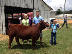 14-Champion-AOB-Commercial-Heifer-Larue-County-Cattle-Show-Brayden-Lancaster