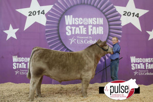 14-Champion-AOB-and-3rd-Overall-Wisconsin-State-Fair-Sam-henderosn