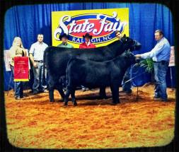 14-Champion-Angus-and-Supreme-Champion-Cow-Calf-Pair-North-Carolina-State-Fair-Karl-Holshouser