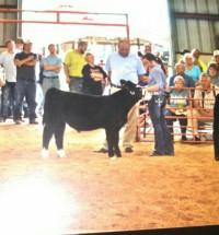 14-Champion-Beef-Feeder-Crawford-county-Fair-Lori-Millenbaugh