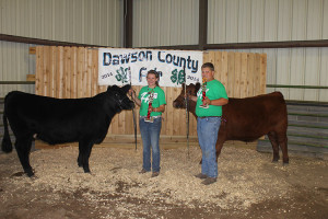 14-Champion-Breeding-Heifer-Dawson-County-Fair-Alyssa-Scneider