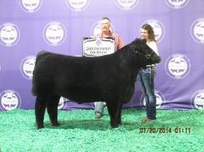 14-Champion-Chi-Michigan-Livestock-Expo-Rebekah-Flynn