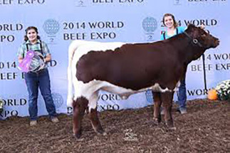 14-Champion-Heifer-World-Beef-Expo-Helsey-Hunsberger