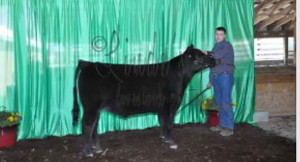 14-Champion-High-Point-Angus-Steer-Indiana's-Finest-Point-Program-Jacob-Farrer