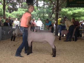 14-Champion-Market-Lamb-Eaton-County-Fair-Kate-Stewart