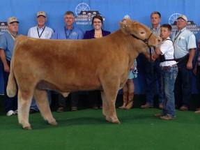 14-Champion-Market-Steer—Missouri-State-Fair-Stetson-Wiss