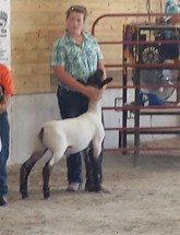 14-Champion-Middle-Weight-Meade-County-Fair-Kaley-Mills