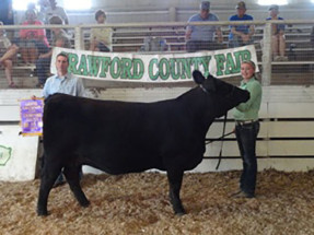 14-Champion-Overall-Heifer-Crawford-County-4H-Show-&-Jr-Show-Camryn-Travis
