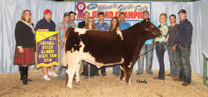14-Champion-Shorthorn-Steer-and-4th-Overall—Illinois-State-Fair-Kinsey-Knauth