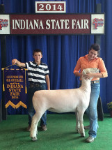 14-Champion-Southdown-Ewe-and-6th-Overall-Indiana-State-Fair-4h-Show-Mackenzie-Padgett
