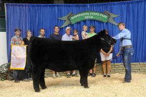 14-Champion-market-Heifer-&-4th-Overall-Minnesota-State-Fair-Spencer-Wangen