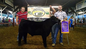 14-Commercial-Feeder-Steer-Mason-Coutny-Fair-Jordan-McCarty