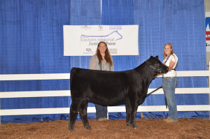 14-Division-2-Champion—Southeastern-Regional-Jr.-Limousin-Show-Ashley-Oberling
