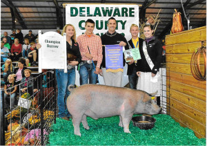 14-Grand-Champion-Barrow-Delaware-County-Fair-Justin-Mackay