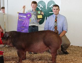 14-Grand-Champion-Barrow-Knox-County-4-H-Fair-Jacob-Misiniec