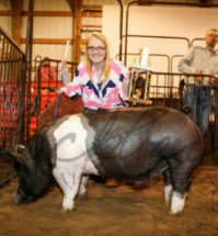 14-Grand-Champion-Barrow-Overall-Fairfield-County-Fair-Alexis-Horn