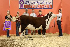14-Grand-Champion-Beef-Cattle-Hereford—Illinois-State-Fair-Mary-Kline