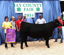 14-Grand-Champion-Beef-Heifer-Overall-Jay-County-Fair-Skye-Wimmer