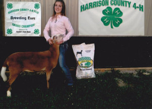 14-Grand-Champion-Breeding-Ewe-Harrison-County-Fair-Camrbridge-Hardin