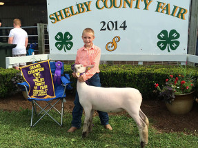 14-Grand-Champion-Breeding-Ewe-and-Reserve-Champion-Lamb-Shelby-County-Fair-Owen-Sprinkle