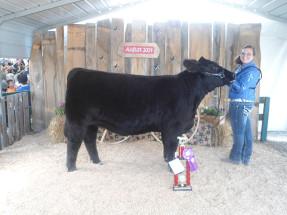 14-Grand-Champion-Breeding-Female-Heifer-Defiance-County-Fair-Maggie-Pollard