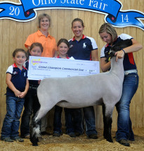 14-Grand-Champion-Commercial-Ewe-Ohio-State-Fair-Ava-Shroyer