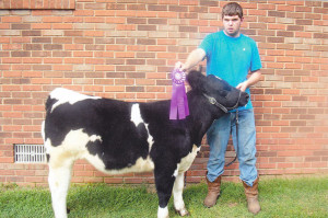 14-Grand-Champion-Commercial-Heifer-Claiborne-County-Fair-Tommy-Turner