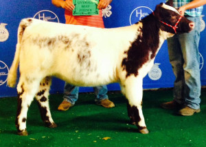 14-Grand-Champion-County-Born,-Bred-and-Raised-Feeder-Calf–Huron-County-Fair-Philip-Bogner