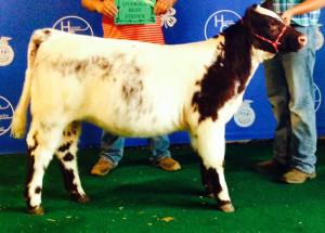 14-Grand-Champion-County-Born,-Bred-and-Raised-Feeder-Calf–Huron-County-Fair-Philip-Bogner